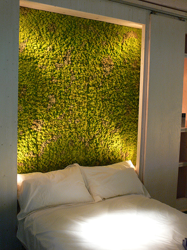 Moss-in-the-bedroom-1523