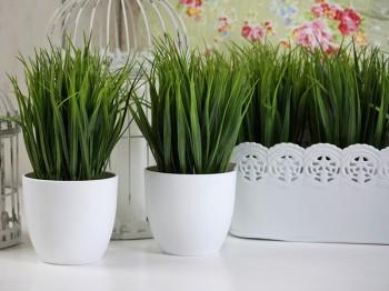 Zielona trawa na orzeźwienie wnętrz