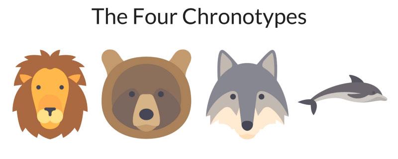 4 chronotypy