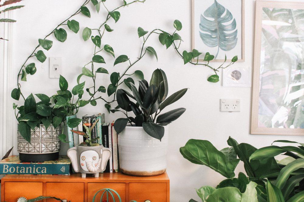 Urban jungle, czyli dżungla w salonie - inspirujące wnętrza z roślinami i kwiatami