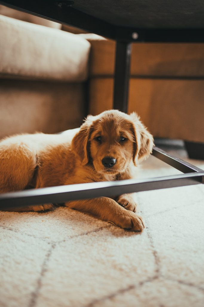 Zwierzęta w domu - meble na metalowych nogach