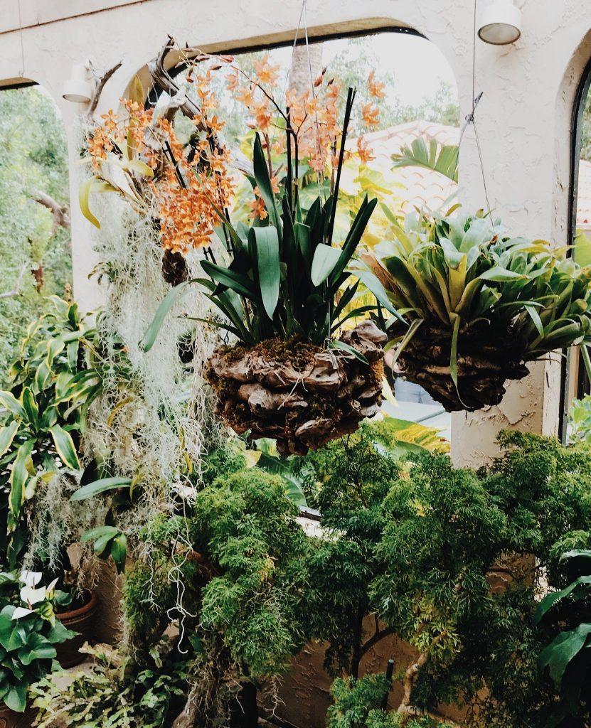 Bujny ogród w domu