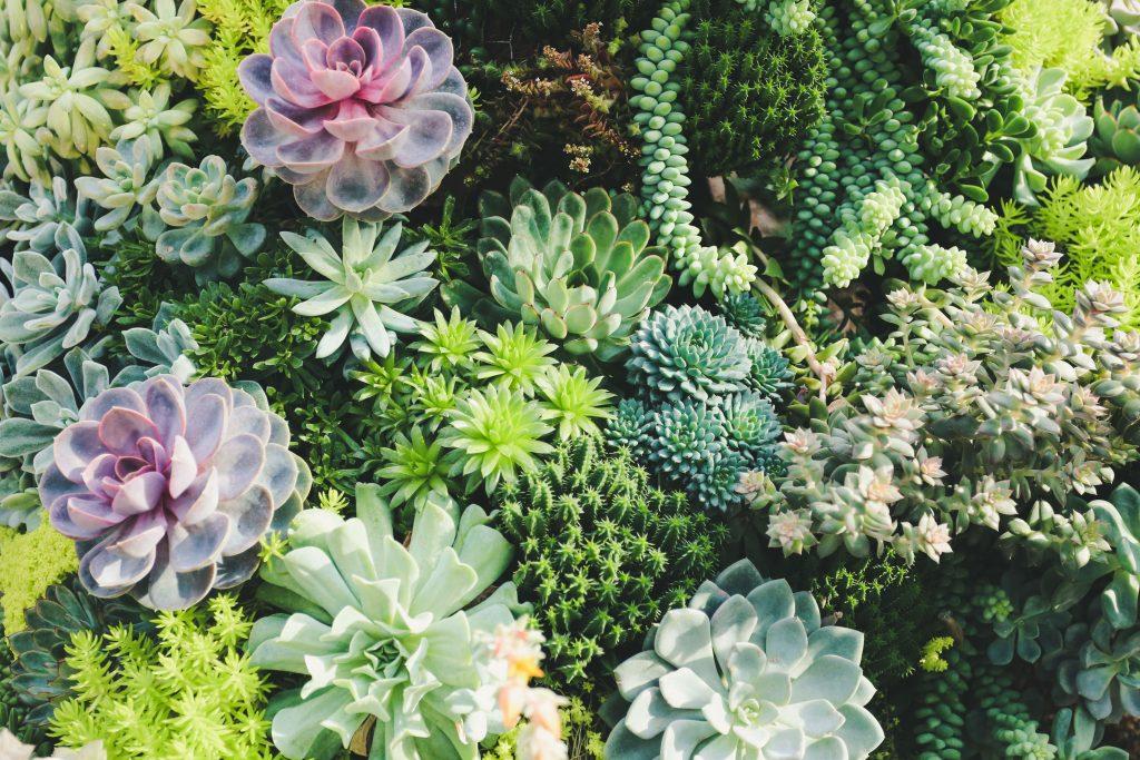 ogród w domu - sukulenty