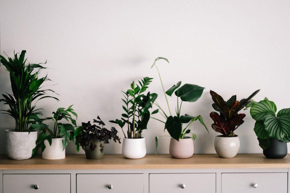 Rośliny doniczkowe w domu — jak je wykorzystać w aranżacji i jak o nie dbać?