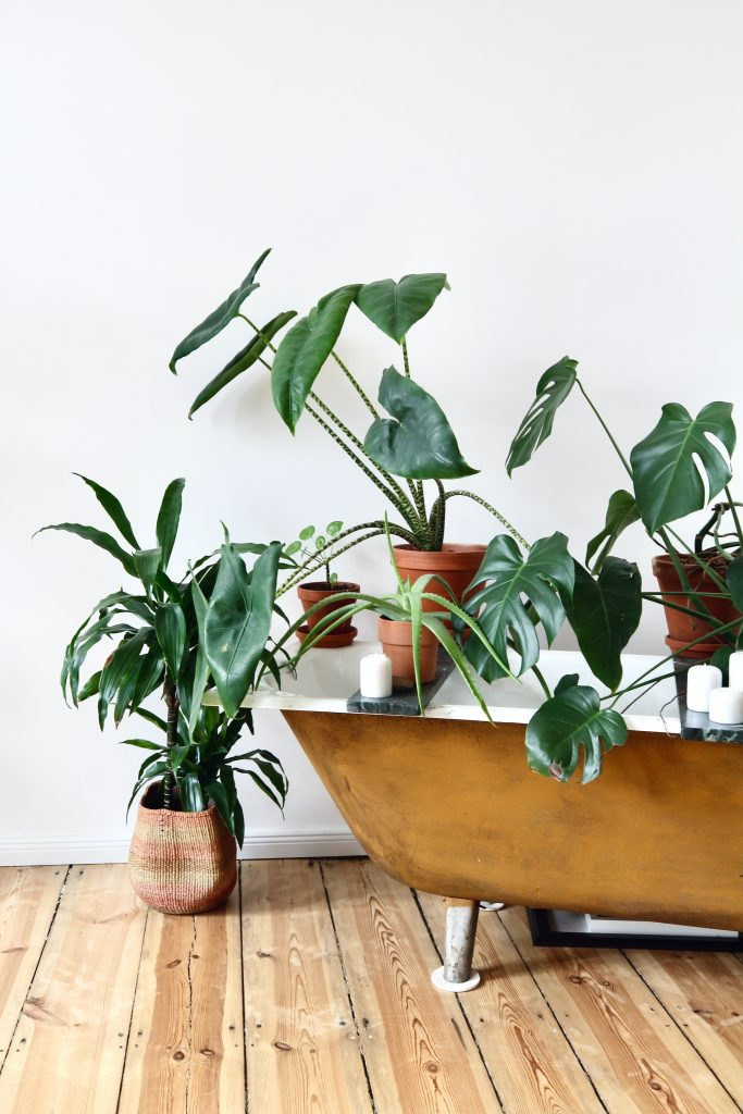 Zielone rośliny w donicach