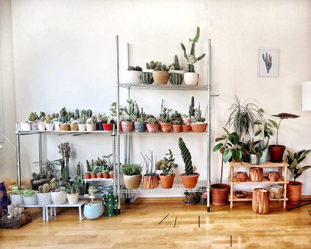 Kolekcja kaktusów i sukulentów