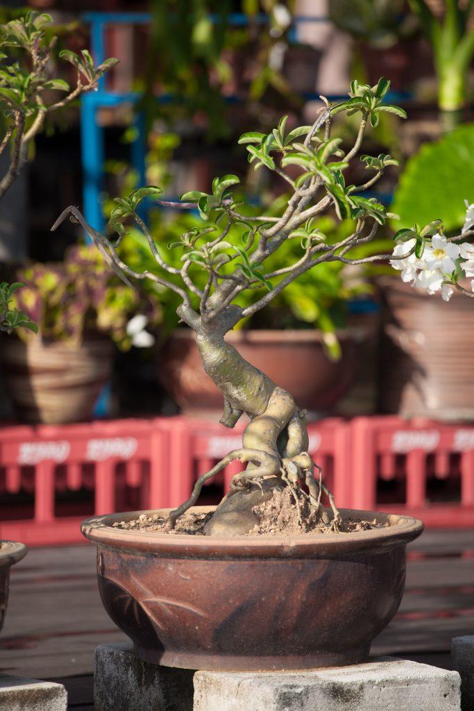 Styl wabi-sabi i drzewko bonsai
